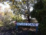 Photo of Naturescape